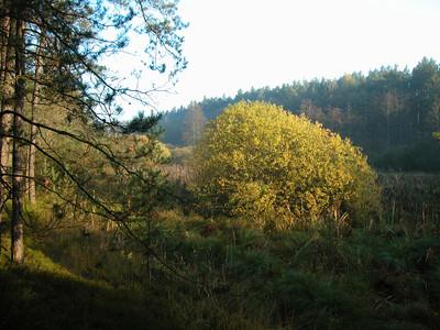 Naturschutzgebiet Feuchtbiotop Zulauf Weichselbrunner Weiher. 2 km entfernt von See-Camping Weichselbrunn