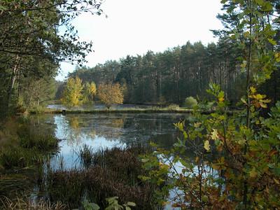 Nur 3 km entfernt von See-Camping Weichselbrunn an der Straße nach Taxöldern vor der Bahnbrücke rechts. Ein kleiner Traum von Fischweihern.