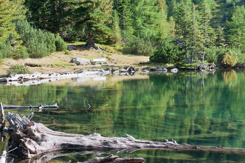 Versunkene Bäume am Großen Scheibelsee