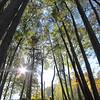 Zu Beginn beim Aufstieg im Wald
