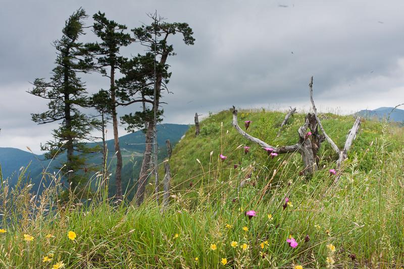 Kirchwaldberg Gipfel