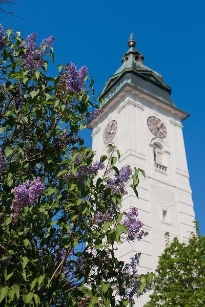 Pfarrkirche Retz hinter blühendem Flieder