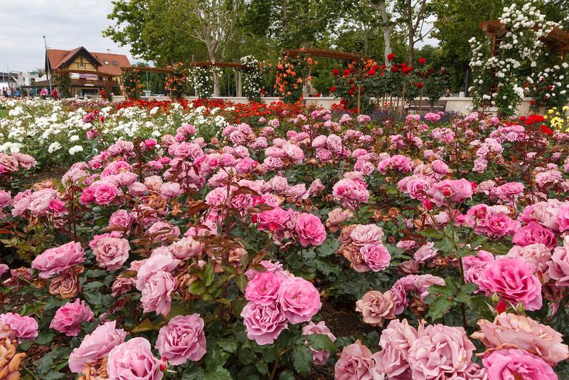 Rosengarten von Balatonfüred