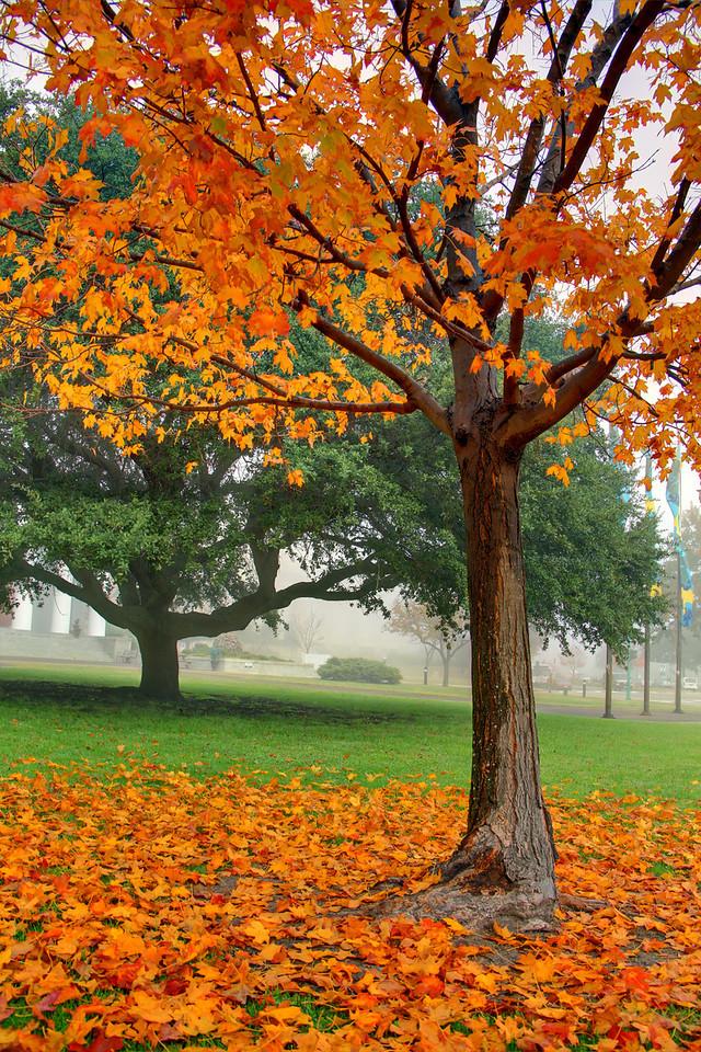 St Paul's Place Autumn Changes