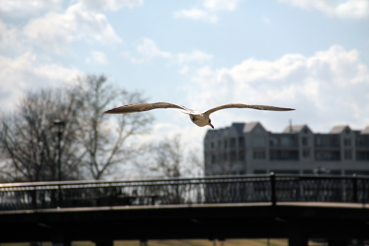 Taking flight on the Hague in Ghent