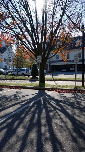 St Pauls Parking Lot Tree