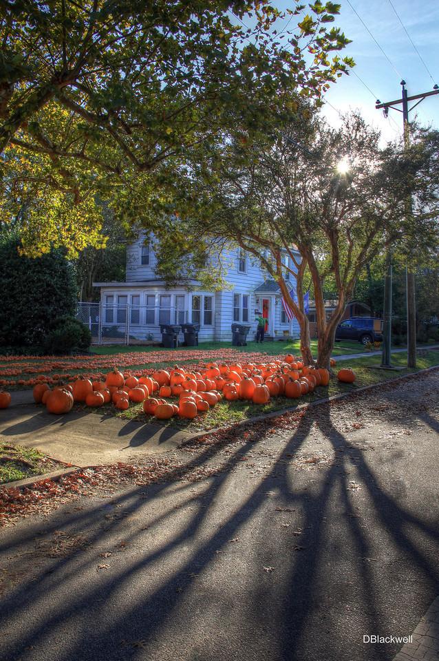 Part of Pumpkin Patch @ Larchmont United Methodist Church