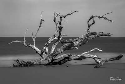 """Foggy Bottom Driftwood"""