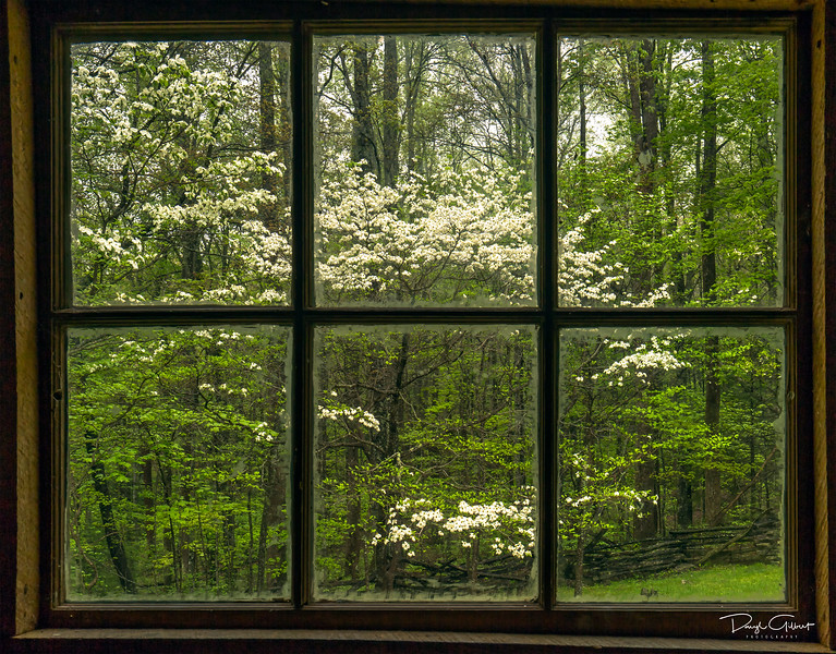 Blooming Dogwoods Through the Windows of the Alex Cole Cabin