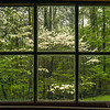 Blooming Dogwoods Through 160 Year Old Windows