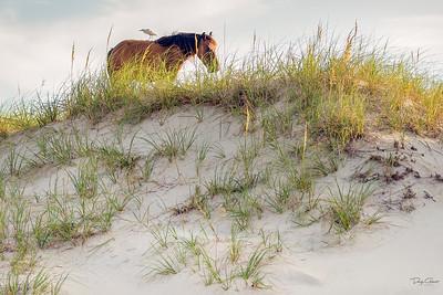 """""""Sand Dune Sentry Duty"""""""