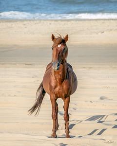 """Wild Stallion"""