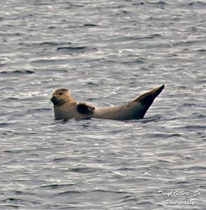 Banana'ing Seal
