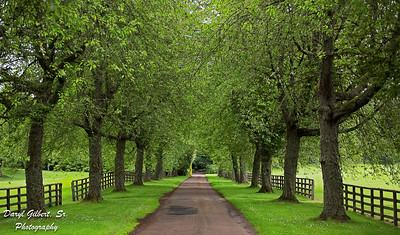 Cawdor Castle's Tree Lined Driveway