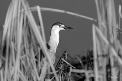 """Good Night Heron"""