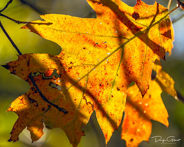 The Leaves of the Pacific Northwest