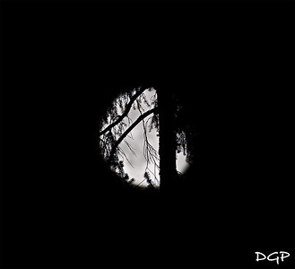 Full Moon through the Pines of Washington