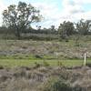 Many emus near to the road side in NSW