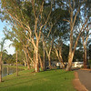 The following photos taken at the Renmark Holiday Park an excellent park to stay at.