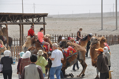 Matt and Jessie rent a couple of camels.