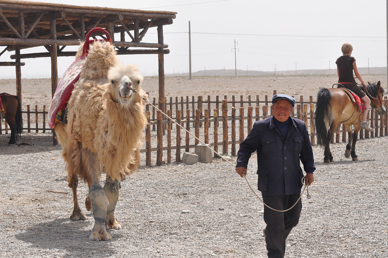 Here's another camel and its owner/rental agent.