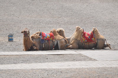 Here's a couple of the rent-a-camels.