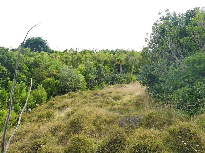 An island transformed