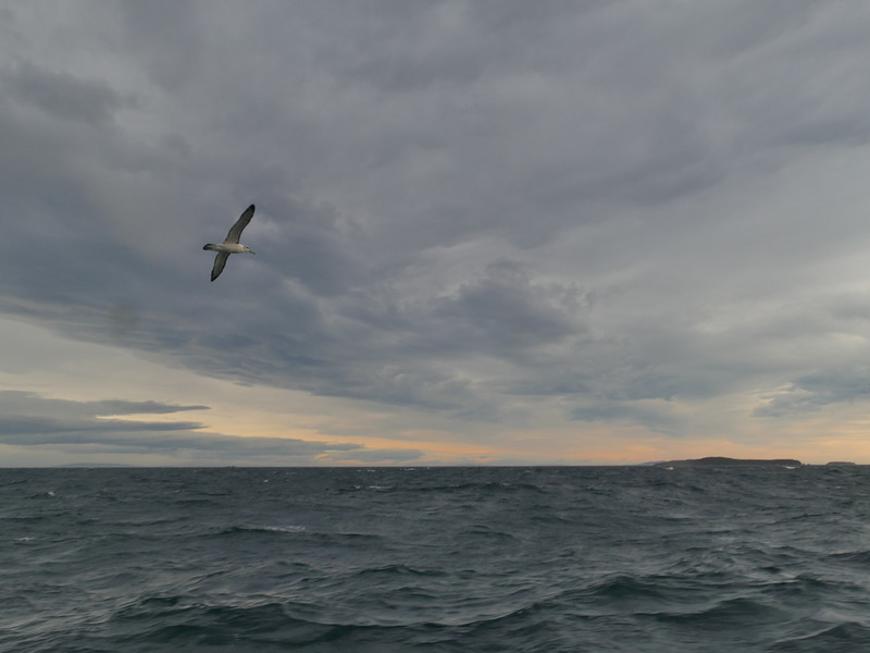 Pelagic trip on Aurora Charters