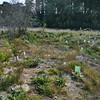 Planting beside Tongariro River