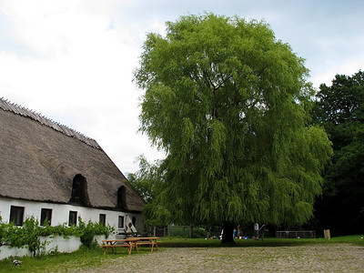 Esrum Kloster og Møllegård - maj 2011