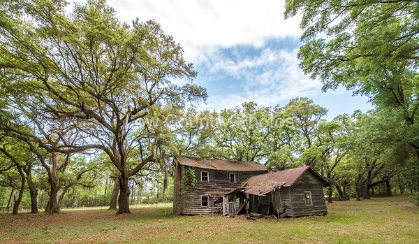 Ruins of an old home on the Hobcaw Barony property, a 17500-acre wildlife refuge near Georgetown, SC