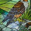 Karearea / N.Z. Falcon