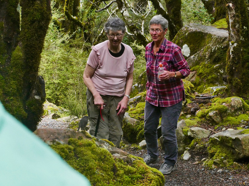 Robin & two admirers, Arthur's Pass National Park