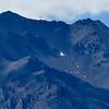 Alpine goose & young, Taylor Range, Lake Heron