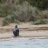 Sea Lion (male)
