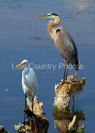 Heron and Egret keeping watch