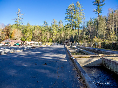 Fish Hatchery in Oconee Countty