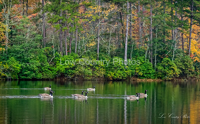 Scenic Views of Oconee State Park