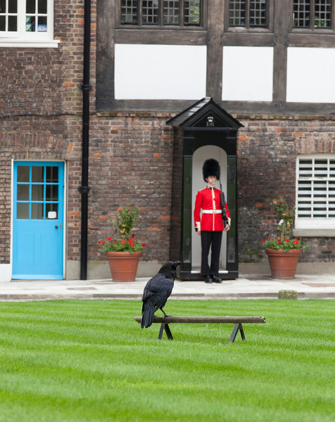 Welsh Guard and Raven at the Tower of London
