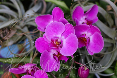 2662-Orchid