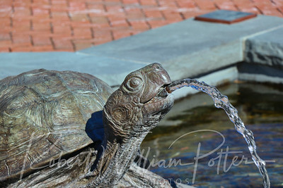 2683-Turtle Fountain