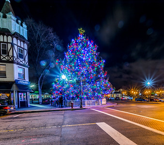 Ridgewood's Town Tree