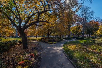 Autumn Foliage Paths