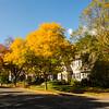 Autumn Colors on Clinton Ave