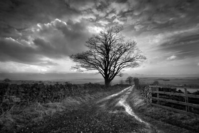 """Cumbrian Tree"" 1st Place Score: 20 Points"