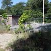 IMG_0481 Chelmsford Dog Park 8-25-2014