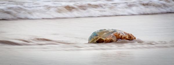 Washed up jellyfish