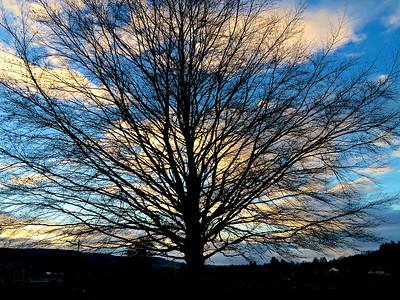 A tree in Ilkley in the evening in November