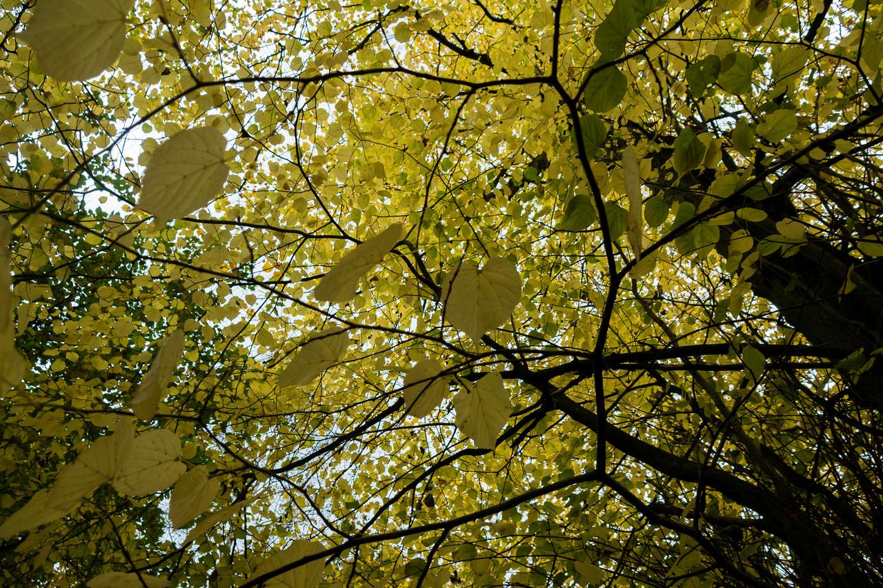 Pale Leaves, Tim Lane, Oakworth