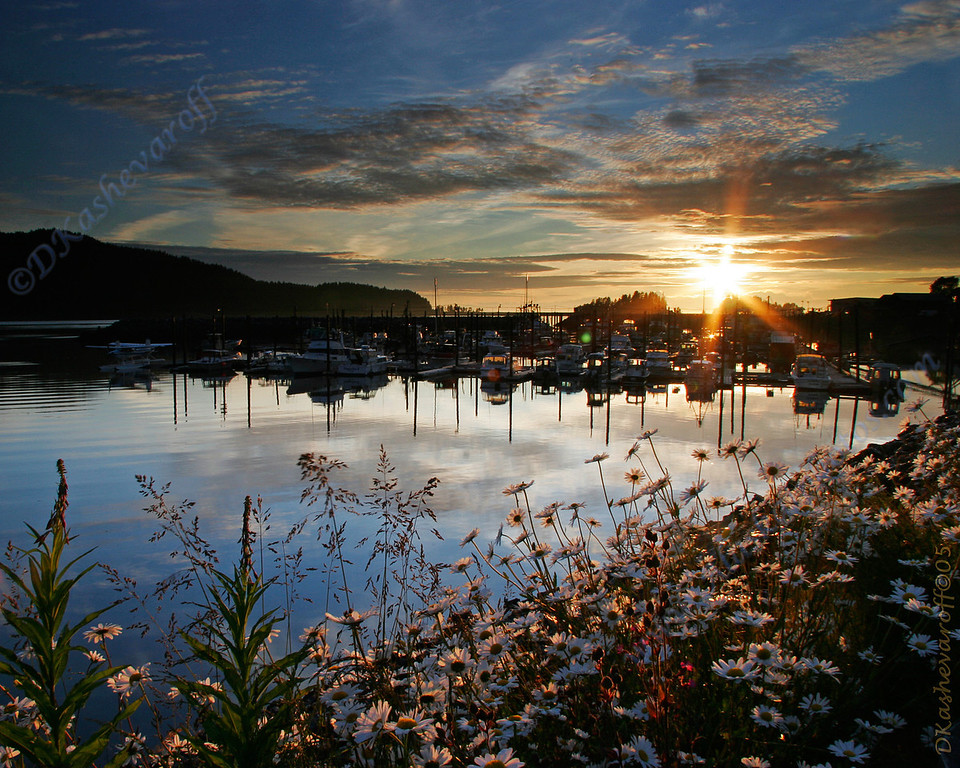 Fireweed, Daisies, and boat harbor
